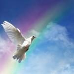 Grace (dove) 27251776_s