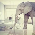 Elephant, 16548871_s